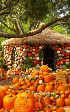 Now that's festive pumpkin decorating - a Pumpkin House! See Autumn at the Arboretum, the fall festival at the Dallas Arboretum that hosts the Pumpkin Village, a town created with pumpkins, gourds & squash. Pumpkin House, Dallas Arboretum, Autumn Scenes, Best Pumpkin, Autumn Aesthetic, Autumn Cozy, Pumpkin Decorating, Fall Decorating, Belleza Natural