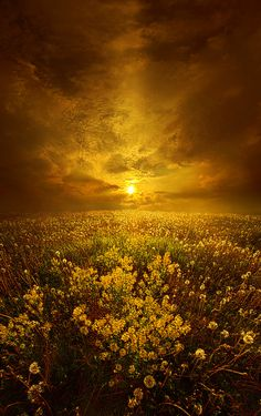 https://flic.kr/p/Ha3BJR | Shine On Me | Wisconsin Horizons By Phil Koch. phil-koch.artistwebsites.com