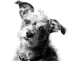 #Dog #Photography with White Background