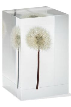 Dandelion Paperweight - Made from a Real Dandelion Seed Puff with free card and envelope * Check this awesome image  (This is an amazon affiliate link. I may earn commission from it)