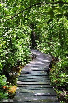 Jungle trail on the shores of Riviera Maya via beersandbeans.com