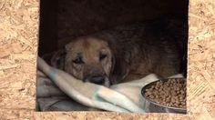 Update: Urgent Help Needed for Dogs in Dubrovnik!   #world #share #help #animals #dogs #animalshelter #croatia #dubrovnik #animalabuse #killing #leonardodicaprio #robinhoodmovie #movie #movies #lionsgate