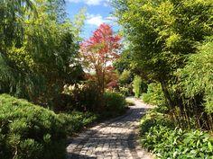 Weg durch den Garten mit Bambus und Japanischem Ahorn