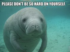 Manatee cares about you.