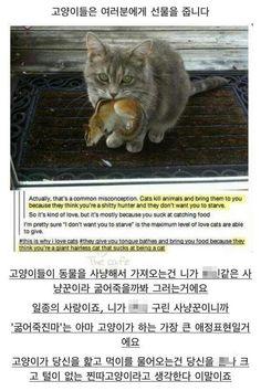고양이를 키워야겠다.
