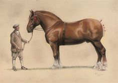 suffolk punch by Cecil Aldin