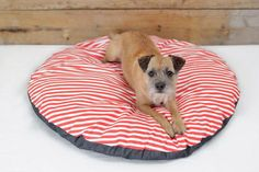 We've cut some corners on our Charlie Be Good beds! Check out our new round ones in store.