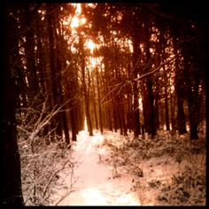 The woods, Bridlington