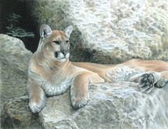 Mountain Lion Art COUGAR HAVEN Original Artwork by by CarlaKurtArt