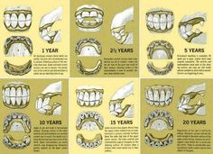 Horse Teeth and Age