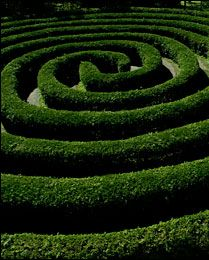 Design Functions  A hedge can be planted to create distinct geometric patterns on the ground, which adds strong form, interest and even whimsy to the garden. In a city yard, a boxwood-edged parterre containing a topiary or clipped tree makes a striking focal point. For added interest and imagery, the parterre's shape can mimic the outline of the house, or the pattern of a stained-glass window or even a Persian rug.