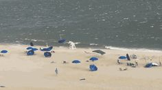 "gifsboom: ""The great umbrella migration. [video] """