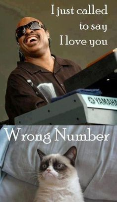 Funny pictures about Stevie calls Grumpy Cat. Oh, and cool pics about Stevie calls Grumpy Cat. Also, Stevie calls Grumpy Cat. Haha Funny, Funny Cute, Hilarious, Super Funny, Funny Stuff, I Love You Funny, Funny Happy, Cat Stuff, Funny Shit