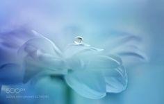 drop by kusoksveta #nature #photooftheday #amazing #picoftheday