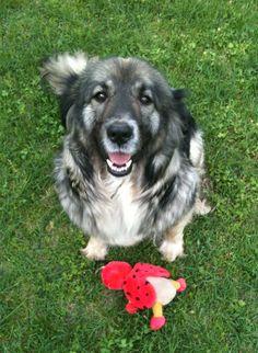 My dog, Dorka. :-)