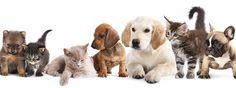 Canile, gattile e non solo: aiutare i nostri amici animali  Chi ama cani e gatti può impegnarsi nella loro salvaguardia in prima persona. Sono diverse le associazioni onlus ed enti no profit a cui rivolgersi. L'ideale è valutare tutti gli aspetti e, quindi, prendere la decisione giusta. http://www.cosedicasa.com/casa-in-fiore/
