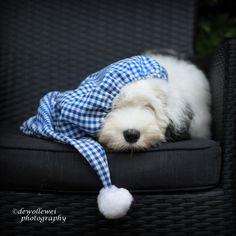 .Sleepie sheepie!