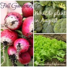 Fall Vegetable Gardening: What to Plant in August - Crunchy Chicken