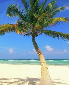 Palm Tree at Beautiful Playa del Carmen Beach