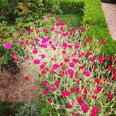 @extraterrestrialist Never enough flower spam #gettyvilla (Taken with instagram)