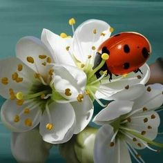 Lady bug and flowers. Beautiful Bugs, Beautiful Flowers, Beautiful Creatures, Animals Beautiful, Animals And Pets, Cute Animals, Bugs And Insects, Tier Fotos, Belle Photo