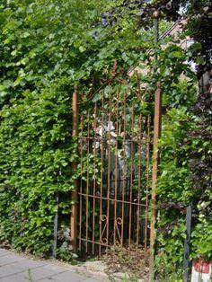 Shabby garden gate