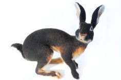 Needle Felted Hare Belgian Hare Large Soft by YvonnesWorkshop