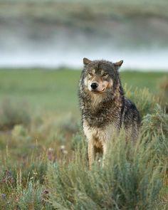 beautiful-wildlife: Guardian by Sandy Sisti