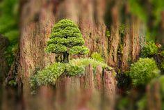 Micro-paisaje. Asturias. Spain.