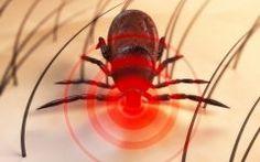 Os 8 Sinais da Doença de Lyme que não Devem ser Ignorados