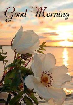 Good Morning Motivation, Good Morning Prayer, Good Morning Sunshine, Morning Blessings, Good Morning Picture, Good Morning Flowers, Good Morning Greetings, Good Morning Good Night, Morning Prayers