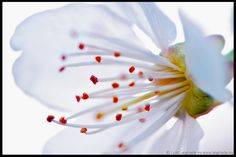 """""""Confetti"""" -- Lynn Langmade Flower Photography -- white, yellow, red  flower, nature, modern, wall print -photograph -"""