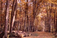 The Limousin oak forrest in France Limoges, Limousin, French Oak, Burgundy, France, City, Plants, Cities, Plant