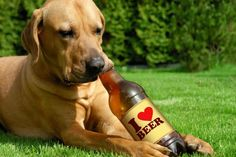 Now You Can Buy Your Dog a Craft Beer (Soft Of)