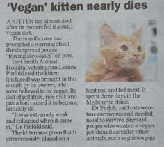 Vegan kitty couldn't handle it anymore!