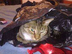 Sally in a bag