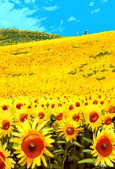 Sunflowers #pascalcampion