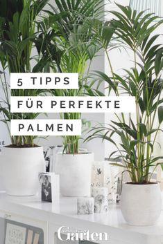 Palmen Pflege: 5 Tipps Für Perfekte Pflanzen