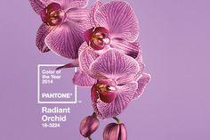 RADIANT ORCHID - Pantone 2014