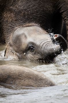 Photograph baby elephant by Björn Mika on 500px