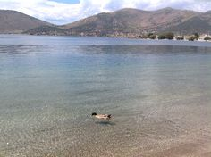 Almyropotamos,Evia,Greece Greece, To Go, Bird, Places, Animals, Holidays, Animales, Vacations, Holidays Events