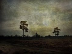 Dutch landscape / trees