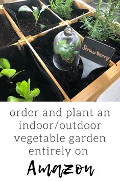 Everything you need to create an indoor herb or vegetable garden without leaving your house! This is a great DIY, gift, or garden project for kids. All lists and details included. Carmen Johnston's tips are sure to keep your vegetable garden thriving! Spring Vegetable Garden, Tomato Garden, Spring Garden, Vegetable Gardening, Garden Mulch, Potager Garden, No Till Garden, Types Of Mulch, Planting Potatoes