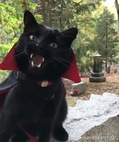 this did actually scare me a bit when it started moving, i wasnt expecting it to. Funny Animal Pictures, Cute Funny Animals, Funny Cats, Beautiful Cats, Animals Beautiful, Animals And Pets, Baby Animals, Gatos Cats, Tier Fotos