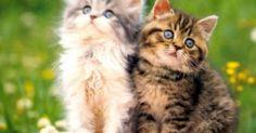 أغرب الحقائق عن القطط