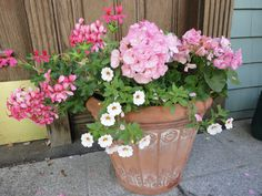 geraniums and Million Bells in front porch container. Million Bells look like miniature petunias and I think they are the most adorable annual to date. I am a sucker for miniatures . Cool Plants, Potted Plants, Garden Plants, Flower Gardening, Outdoor Planters, Planter Pots, Million Bells, Geranium Flower, Spring Plants