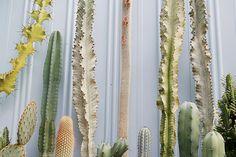 cactus and euphorbia