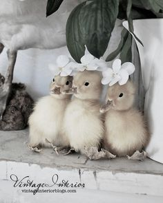 sweet baby chicks in their floral easter bonnets:)