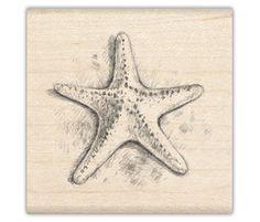 3 dimensional starfish drawing - Google Search