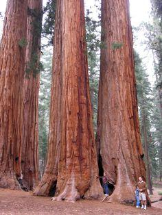 Parc National de Séquoia, Californie